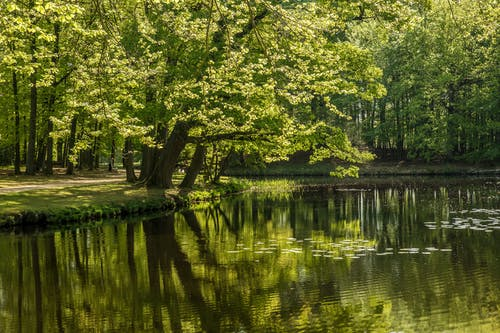 Green Trees near the Placid Lake