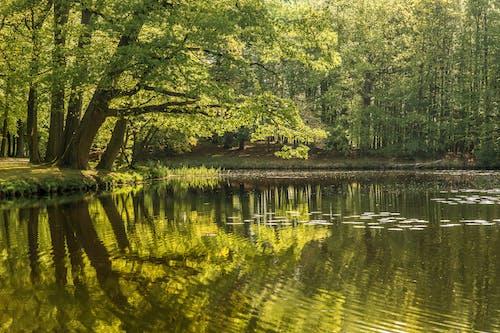 Kostenloses Stock Foto zu außerorts, bäume, draußen