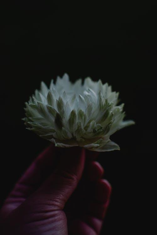 Белый цветок на черном фоне