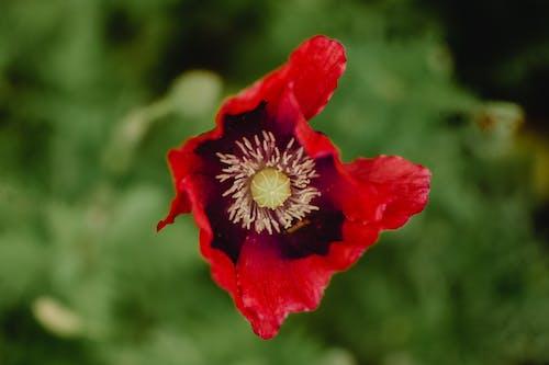 красный цветок в объективе Tilt Shift