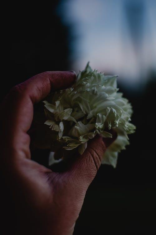Лицо, занимающее букет белых цветов