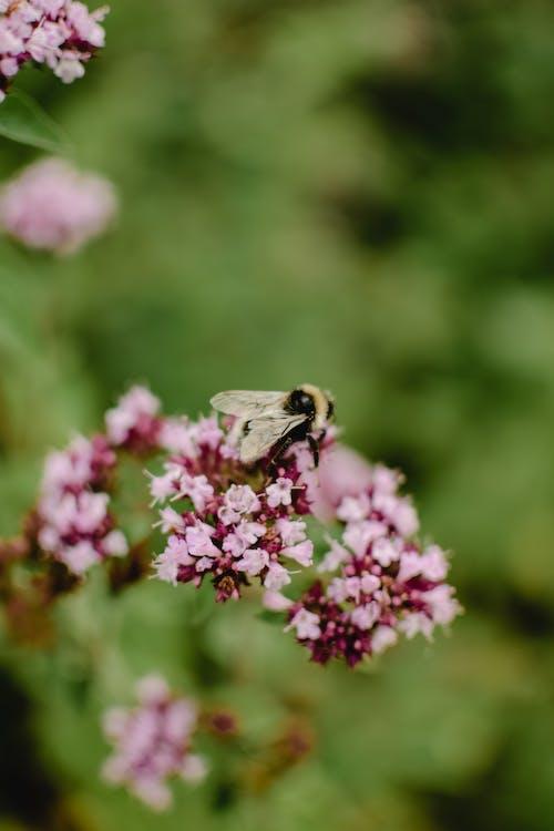 Macro Shot of Honey Bee on Pink Flowers