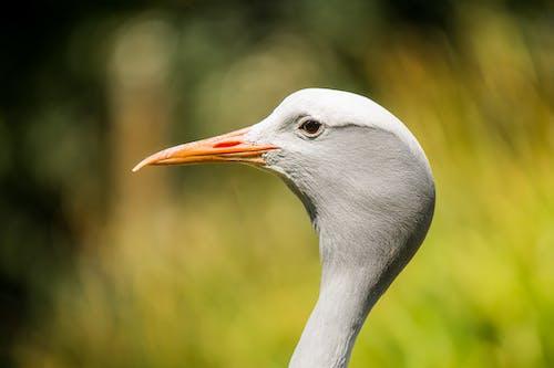 Close-Up Photo of White Bird with Orange Beak