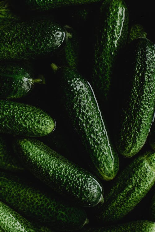 Close-Up Photo of Green Cucumbers