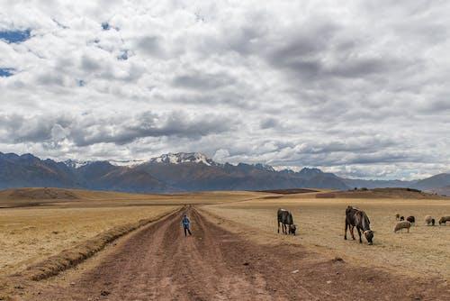 Immagine gratuita di agricoltura, allevamenti, ambiente