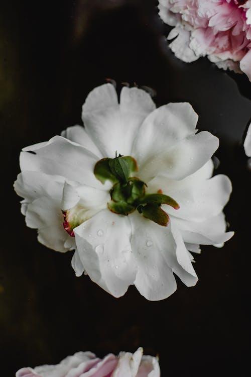 Белый цветок с зелеными листьями