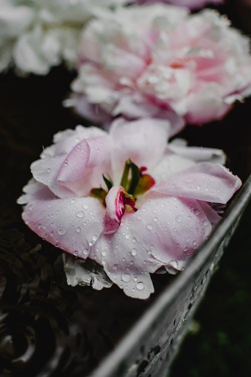 Gratis lagerfoto af blomst, blomstermotiv, blomstrende