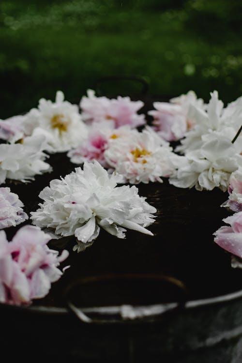 Белые и розовые цветы на коричневом деревянном столе