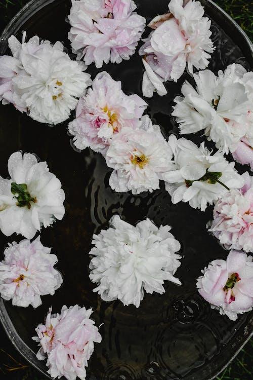Gratis lagerfoto af blomster, blomstermotiv, blomstrende