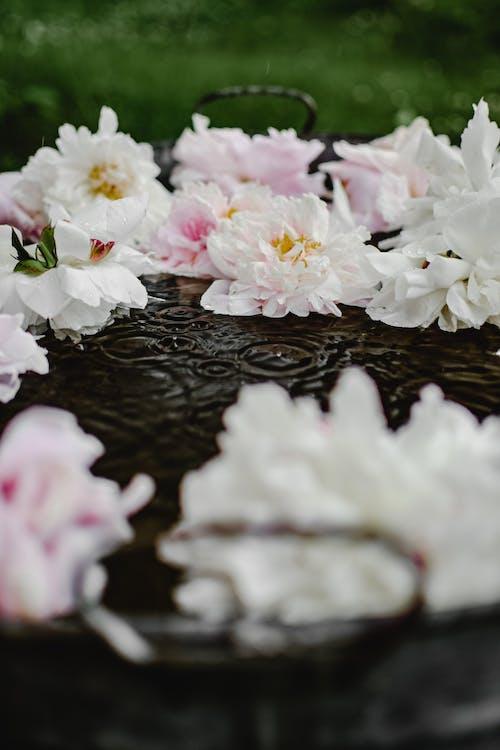 Белые и розовые цветы на воде