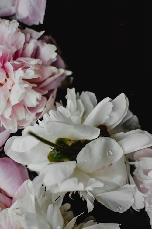 Yeşil Yapraklı Beyaz Ve Pembe çiçekler