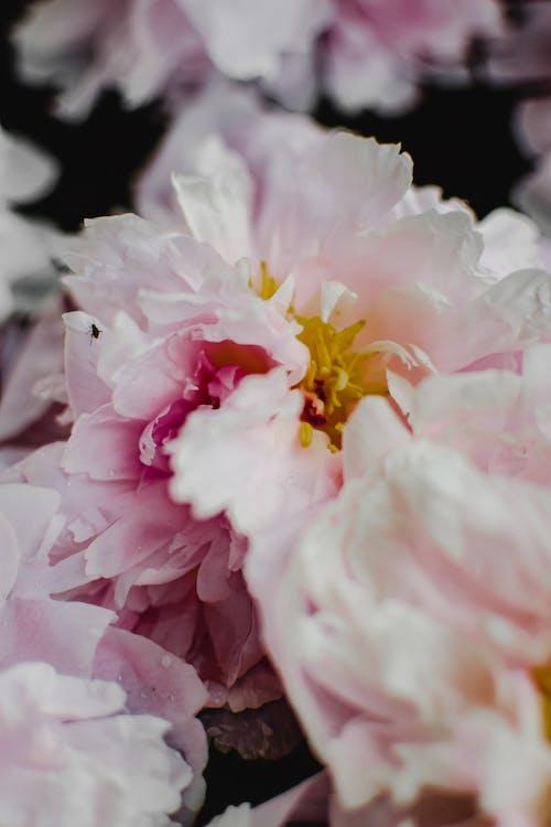 розово белый цветок в макрообъективе