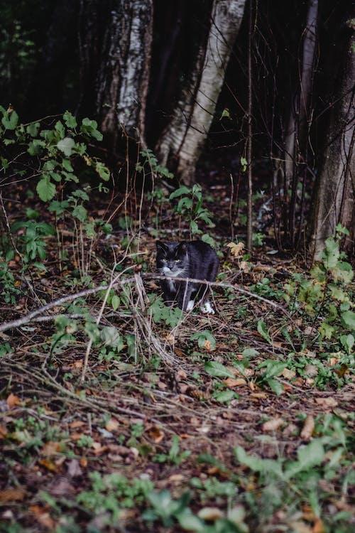 Chat Noir Et Blanc Sur Forêt
