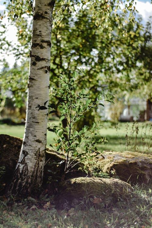 Green Tree on Brown Rock