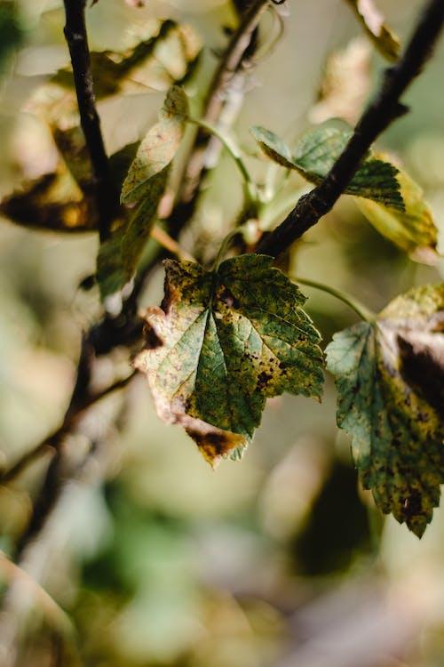 Green and Brown Leaf in Tilt Shift Lens