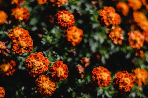 Orange Flowers in Tilt Shift Lens