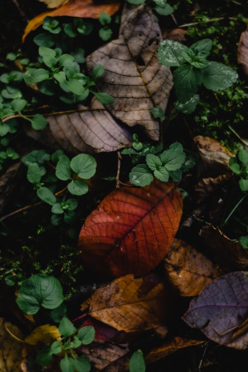Brown and Green Leaves on Ground