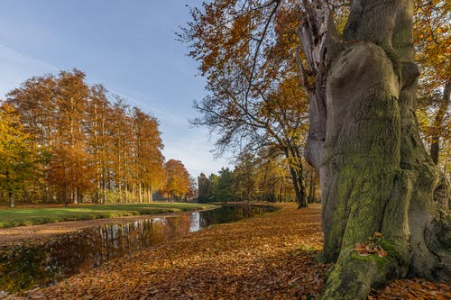 Green and Brown Trees beside the River