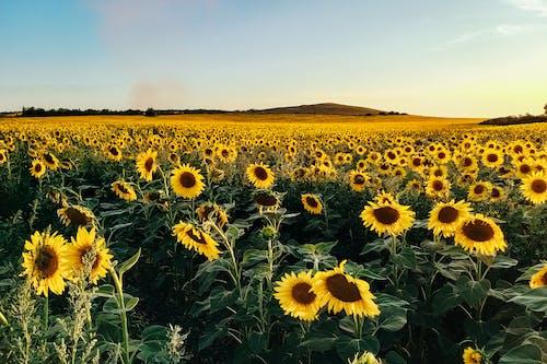 Immagine gratuita di agricoltura, ambiente, azienda agricola