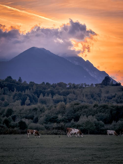 垂直拍攝, 天性, 山 的 免費圖庫相片