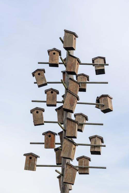 Fotos de stock gratuitas de asta, colgando, de madera