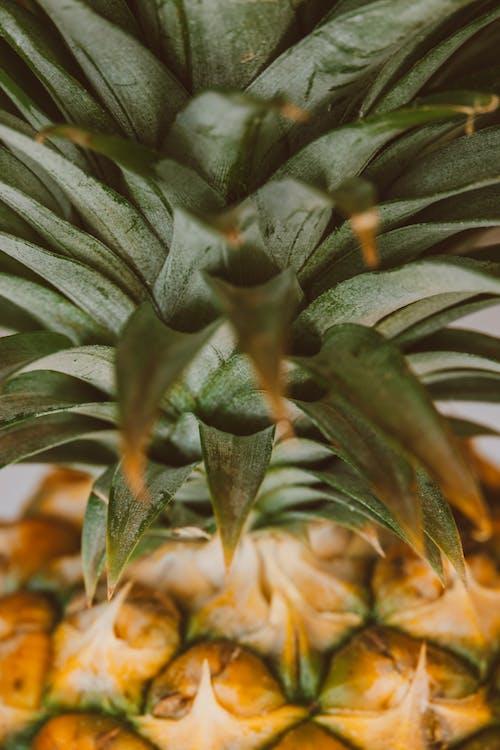 Imagine de stoc gratuită din agricultură, ananas, arbore, cactus