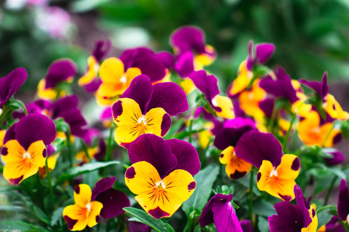 Close-Up Shot of Yellow and Purple Flowers