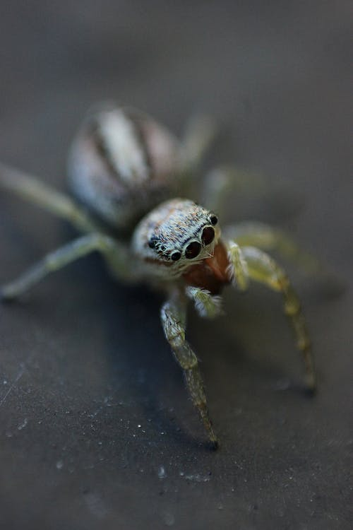 Close-Up Shot of White and Yellow Spider