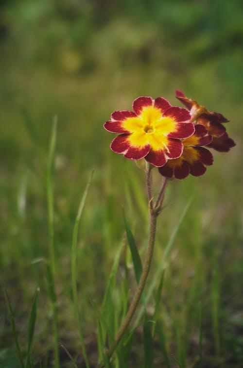 Kostnadsfri bild av blad, blomma, blommor, fält