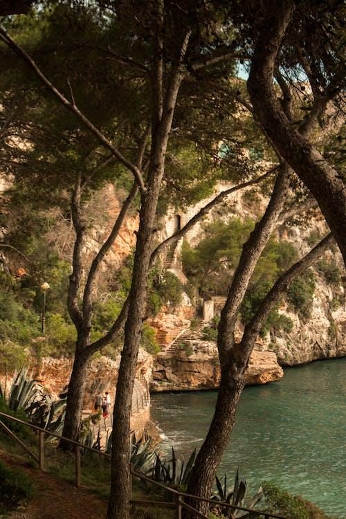 Kostenloses Stock Foto zu beautifu, bergwandern, desktop hintergrund, grüne natur