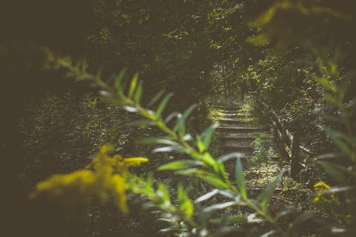 Narrow weathered staircase in lush green forest