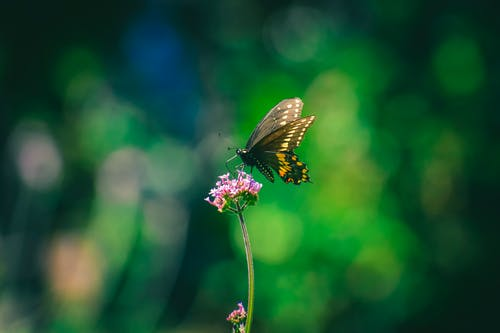 Butterfly sipping nectar from fragrant purple flower