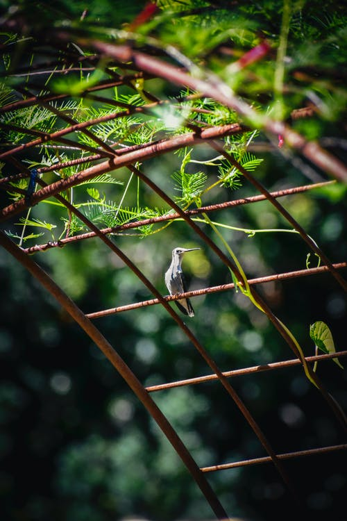 Cute small hummingbird sitting on arched decoration in verdant lush garden on sunny summer weather