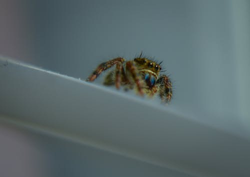 Spider crawling on white surface against gray wall