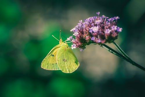 Ilmainen kuvapankkikuva tunnisteilla hauras, hieno, hyönteinen, kasvikunta