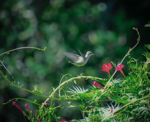 Ilmainen kuvapankkikuva tunnisteilla eläin, kärpänen, kaunis, kesä