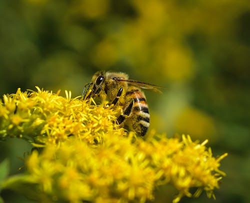 Ilmainen kuvapankkikuva tunnisteilla ampiainen, hunaja, hyönteinen, kesä