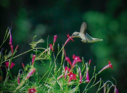Ilmainen kuvapankkikuva tunnisteilla eläin, kärpänen, kasvikunta, kaunis