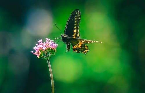 Ilmainen kuvapankkikuva tunnisteilla hauras, hieno, hyönteinen, kärpänen