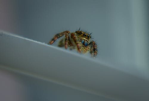 Ilmainen kuvapankkikuva tunnisteilla aavemainen, eläin, hämähäkinverkko, hämähäkki