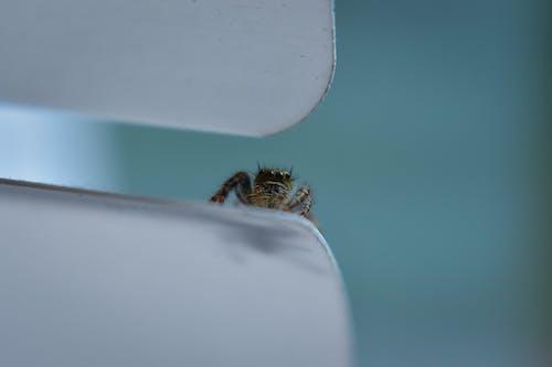 Ilmainen kuvapankkikuva tunnisteilla eläin, hämähäkki, heijastus, hunaja