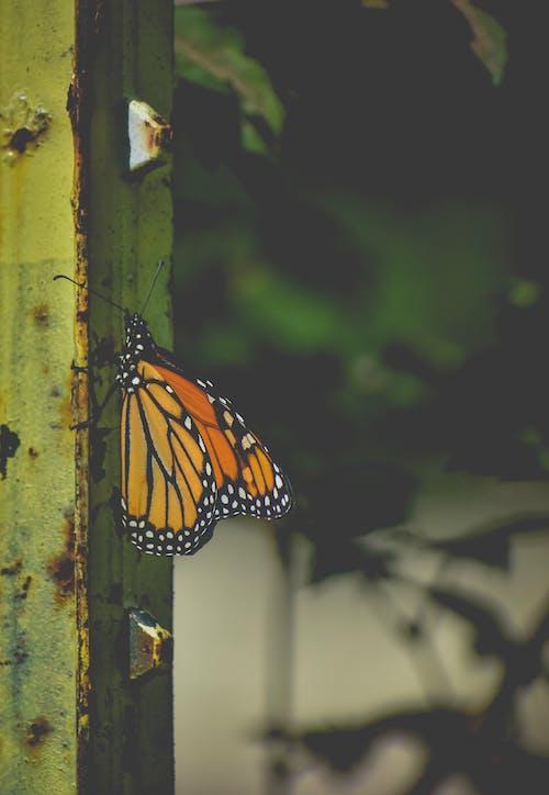 Ilmainen kuvapankkikuva tunnisteilla biologia, hauras, hieno, hyönteinen