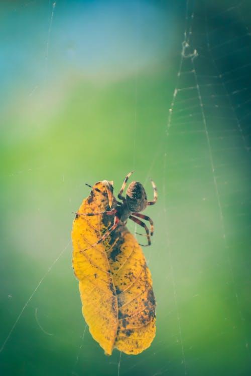 Ilmainen kuvapankkikuva tunnisteilla eläin, hämähäkinverkko, hämähäkki, hämähäkkieläin