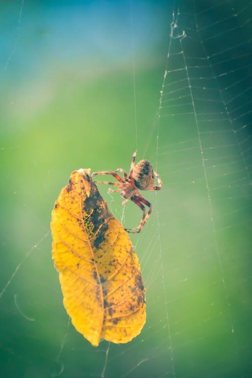 Ilmainen kuvapankkikuva tunnisteilla ansa, hämähäkinseitti, hämähäkinverkko, hämähäkki