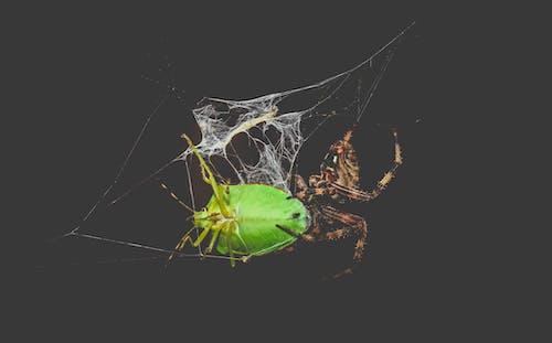 Ilmainen kuvapankkikuva tunnisteilla aavemainen, eläin, fobia, hämähäkki