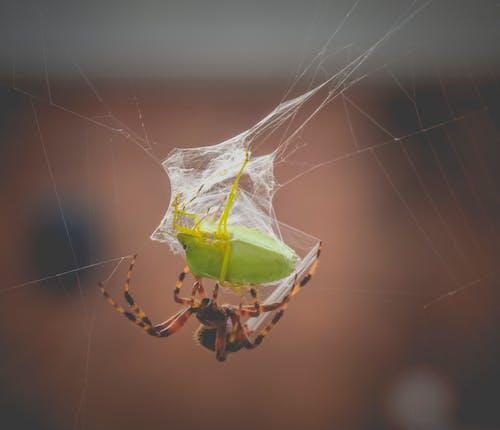Ilmainen kuvapankkikuva tunnisteilla ansa, eläin, hämähäkinseitti, hämähäkinverkko