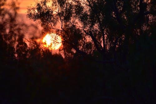 Free stock photo of orange, sunrise, west texas