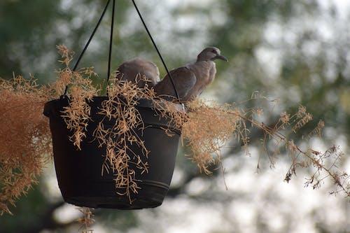 Free stock photo of baby birds, dove, hatch, ready to fly