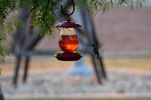 Free stock photo of bird feeder, hummingbird, summer, sunrise