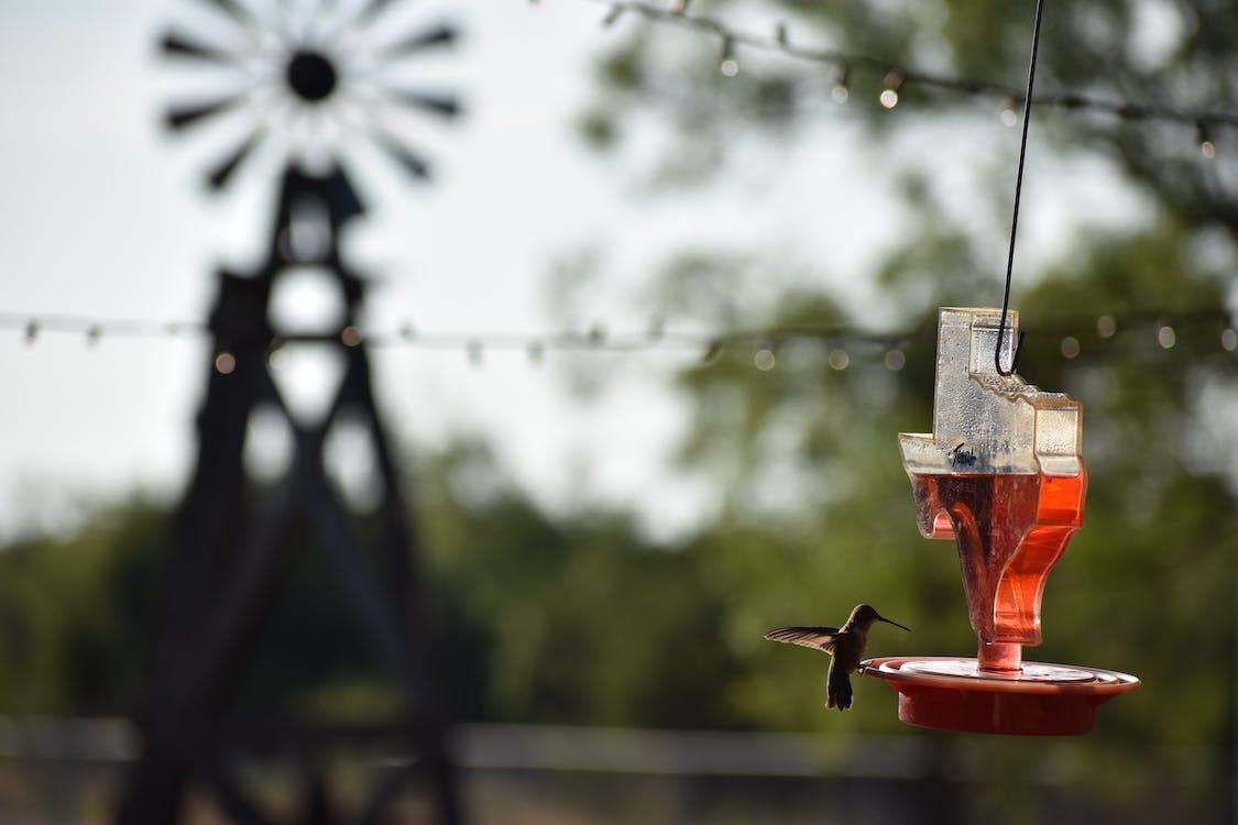 hummingbird, sunrise, west texas